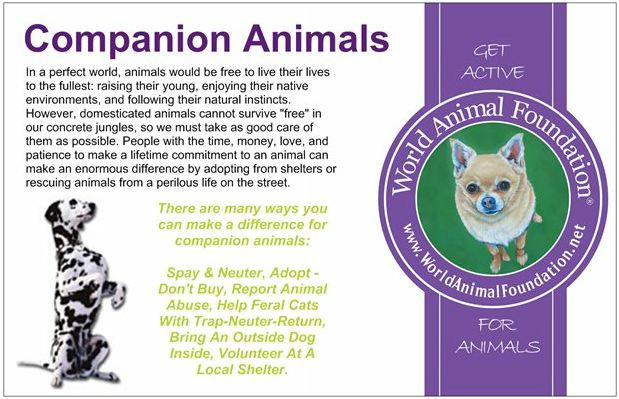 helpcompanionanimals_2 (1)